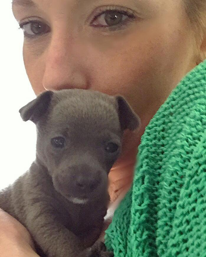 my littlest client 8 week old grey loved babysitting him for his