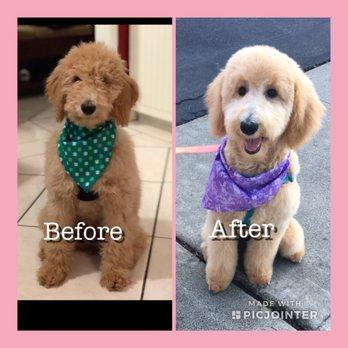 Dog Grooming Irvine