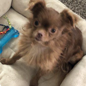 Night In Charleston I Met Katrina Dog >> Paws Atlanta 49 Photos 36 Reviews Animal Shelters 5287