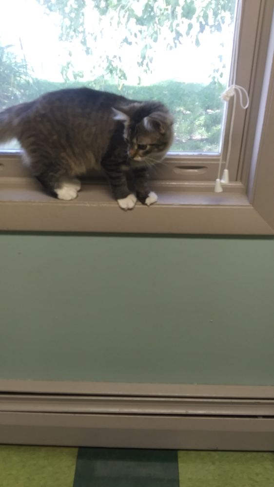 Bradford Veterinary Clinic: 176 Waits River Rd, Bradford, VT
