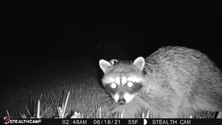 Photo of Panhandle Critter Gitter: Hayden, ID