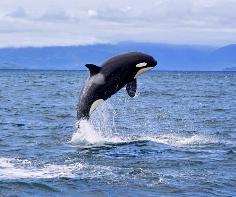 Hoonah Whale Tours: 376 Garteeni Hwy, Hoonah, AK