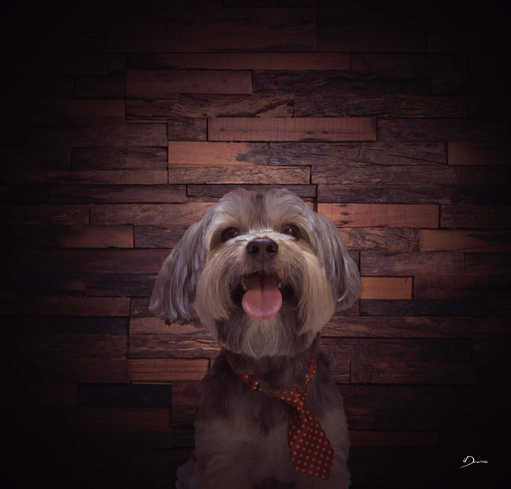 Cookies Pet Grooming: 16782 NW 67th Ave, Miami, FL