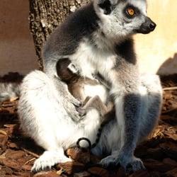 Jardin Zoologique Tropical Zoos 583 Route De Saint Honore La