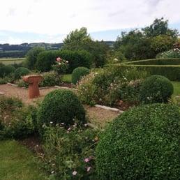 Photo Of Michael Lowe Gardening Services   Hexham, Northumberland, United  Kingdom. Box Topiary