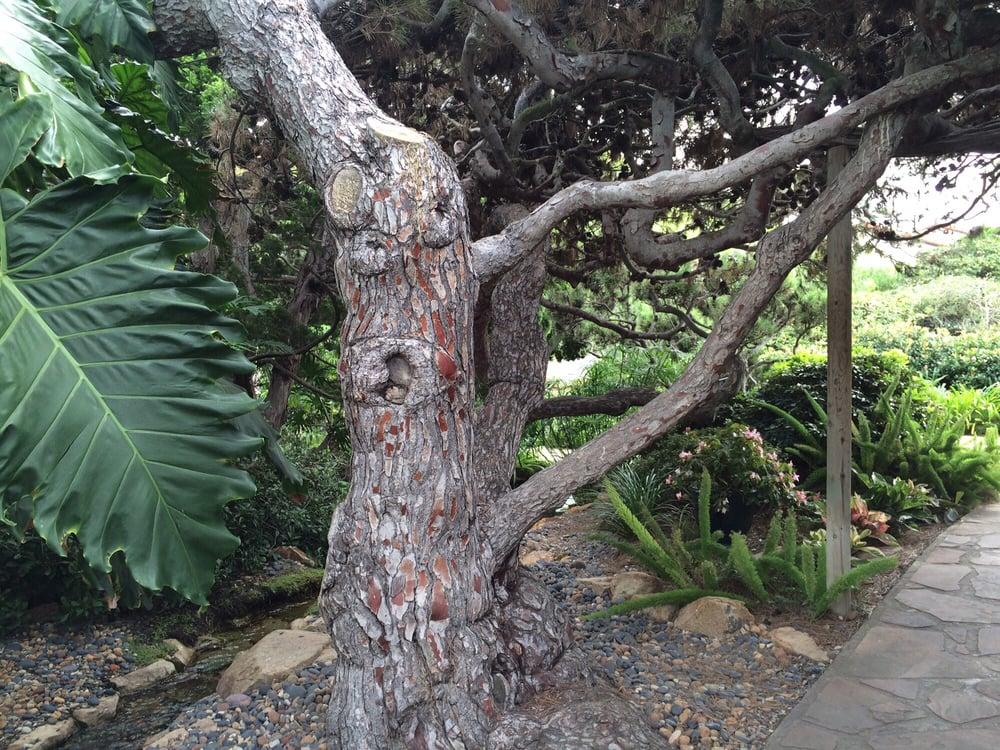 Photos For Self Realization Fellowship Hermitage Meditation Gardens Yelp