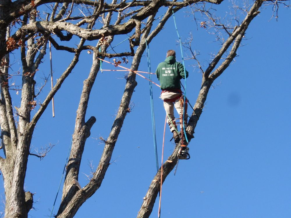 Arlington Tree Care: 325 N Edison St, Arlington, VA