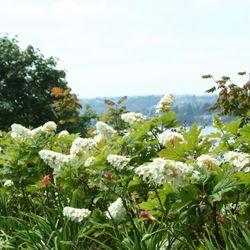 Exceptionnel Photo Of Zook U0026 Oleson Gardening   Seattle, WA, United States ...