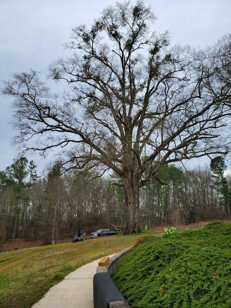 Clean Cut Tree Care: Canon, GA