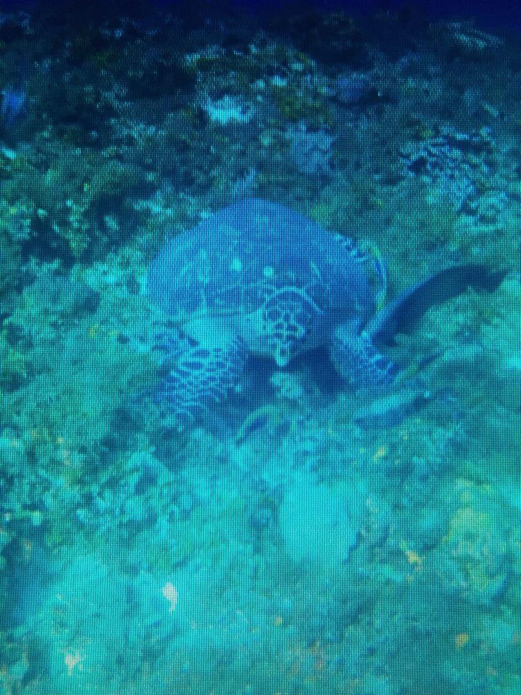Aquatic Dreams Diving Scuba: 1039 Buddleia Ct, Florence, KY