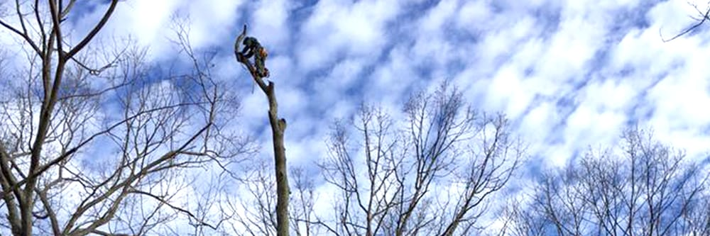Davis Tree Care: 1 Center St, Factoryville, PA