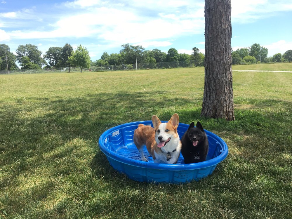 Ames Dog Park: 605 Billy Sunday Rd, Ames, IA