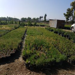 Photo Of Vista Whole Nursery Riverside Ca United States