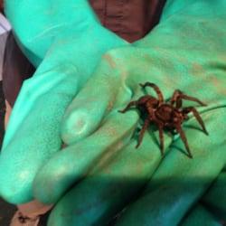 Pest Control Grain Valley  Photo of Moxie Pest Control - Grain Valley, MO, United States. Welcome to