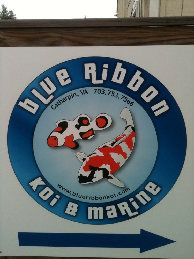 Blue Ribbon Koi & Marine Products: 4641 Sudley Rd, Catharpin, VA