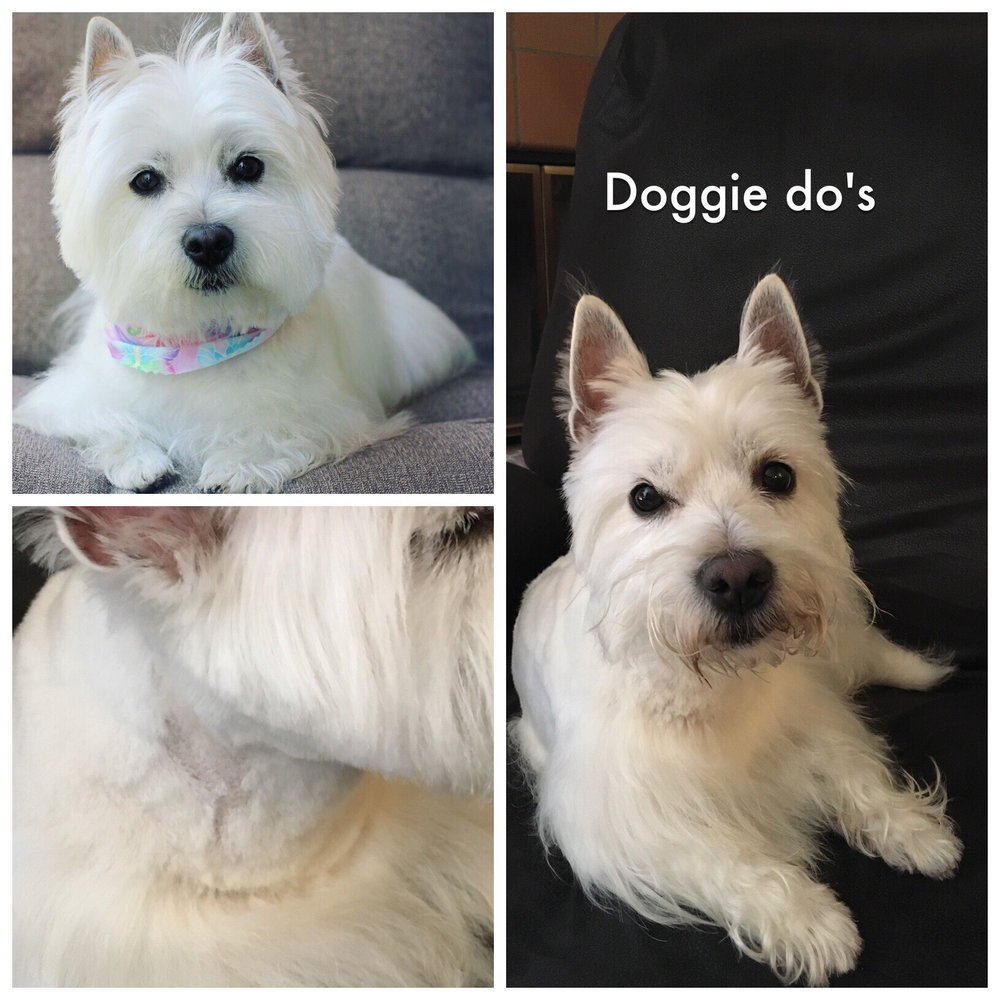 Doggie Dos by Terri