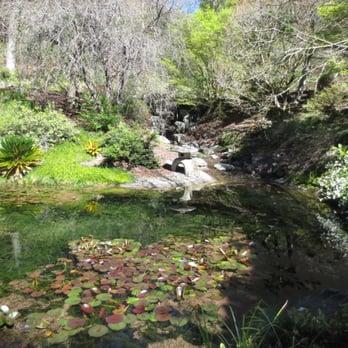 UC Botanical Garden at Berkeley - 717 Photos & 238 Reviews ...