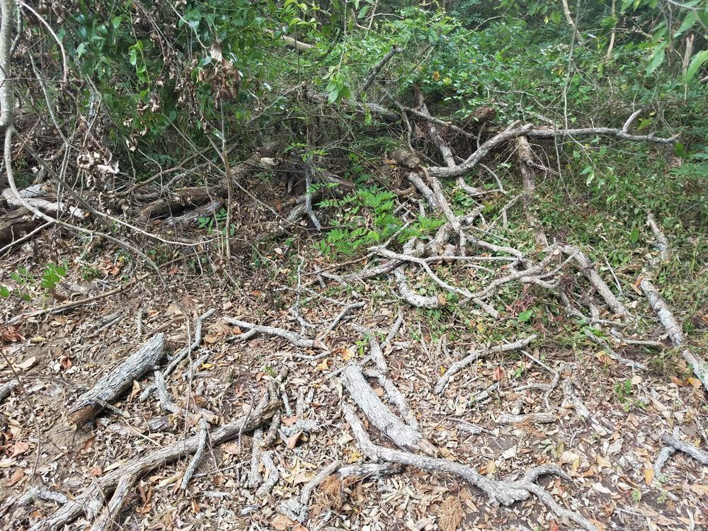 SCE Landscaping/Tree Service: 155 Jim St, Alto, TX