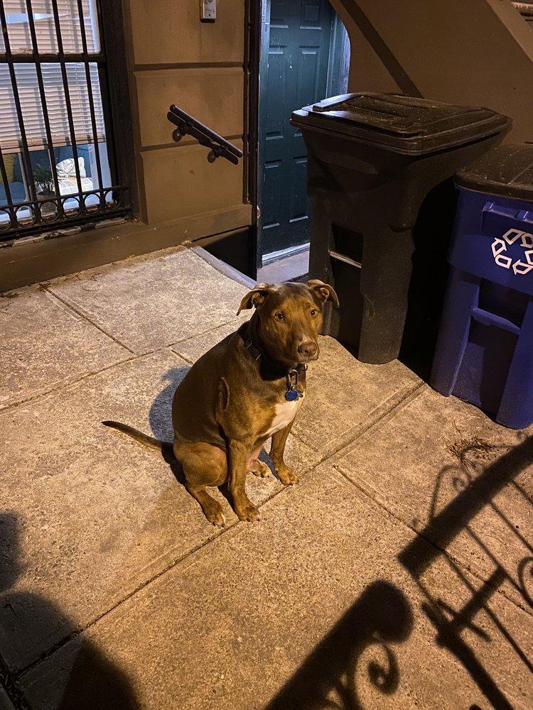 Frida's Premium Pet Services