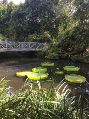 Kanapaha Botanical Gardens 4700 SW 58th Dr Gainesville, FL Tourist  Attractions   MapQuest