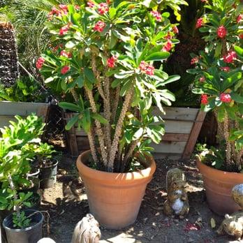 Espinoza Palms Nursery 48 Photos Nurseries Amp Gardening