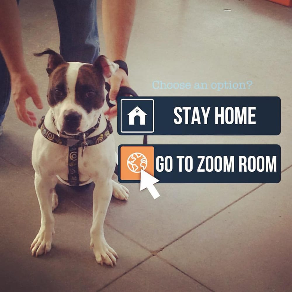 Zoom Room Dog Training - 82 Photos & 28 Reviews - Pet Training ...