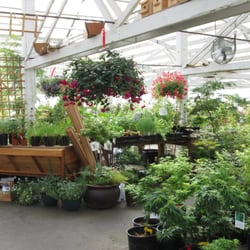 Photo Of Tsuki Nursery   Olympia, WA, United States. An Ever Changing  Selection