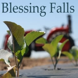 blessed farm partnership Milford - maurice edward blessing was born sept 3, 1931 near hickman/vernon, del to florence morgan blessing and william blessing, sr during his youth, along with three older brothers.