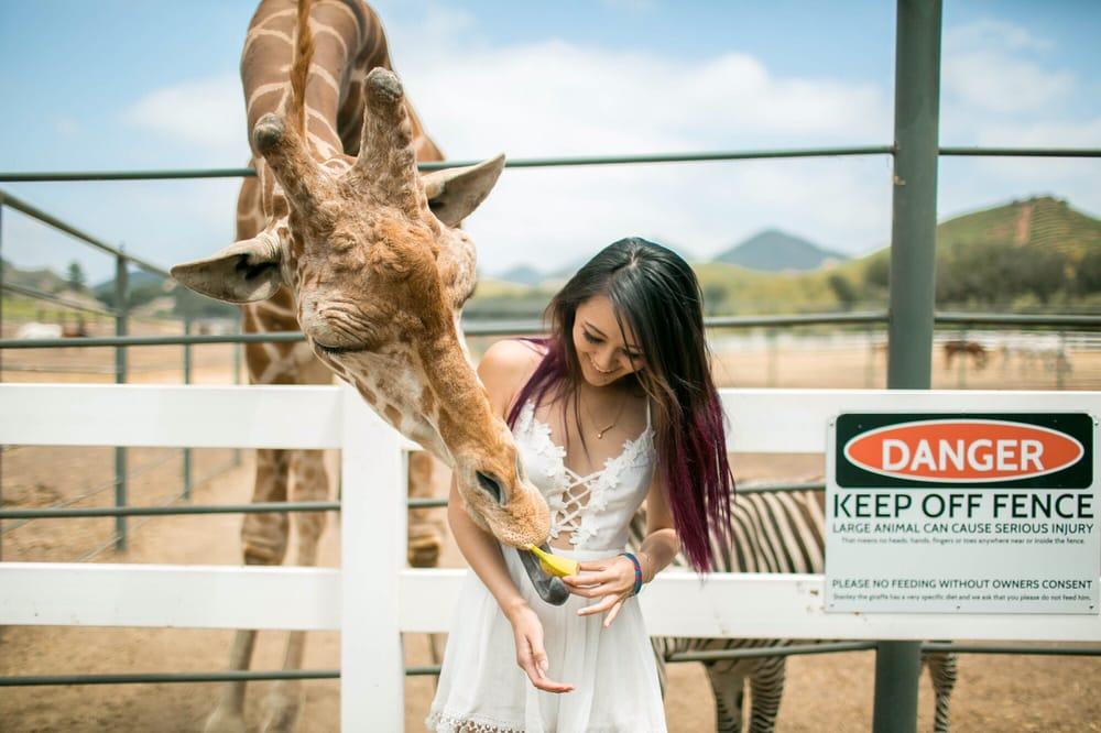 Feeding Stanley The Giraffe Yelp