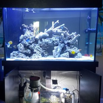 Exceptional Photo Of Living Reef Aquariums   Oakland Park, FL, United States. My Tank