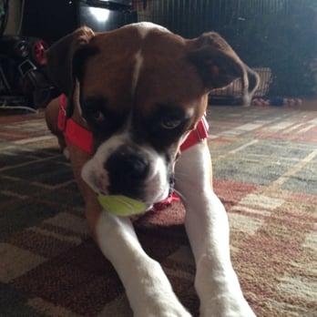 Boxer Rescue LA  - 41 Photos & 26 Reviews - Pet Adoption - 17514