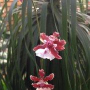 Photo Of Oak Creek Plants Flowers Lincoln Ne United States