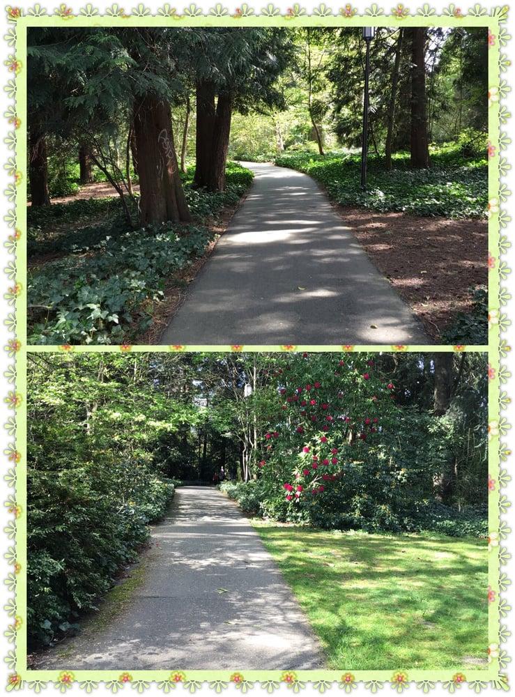 Medicinal Herb Garden Botanical Gardens Stevens Way University District Seattle Wa
