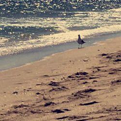 Photo Of Ebb Tide Resort Pompano Beach Fl United States Calm