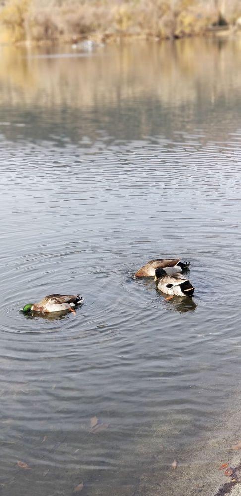 Four Island Lake: 29641 Pinedale Dr, Tehachapi, CA