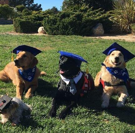 Doggie Do Good: 335 Summit Station Rd, Arroyo Grande, CA