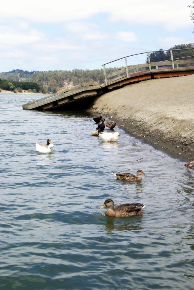 Lake full of ducks yelp for Lake chabot fishing