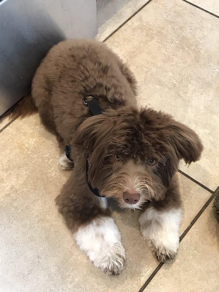 Four Corners Pet Grooming: 8953 Conroy Windermere Rd, Orlando, FL