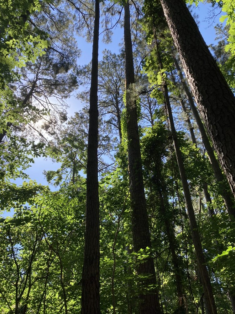 Stephen F. Austin Experimental Forest Interpretive Trail: Nacogdoches, TX