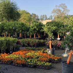 Photo Of Plants Florida Jacksonville Fl United States Flowers