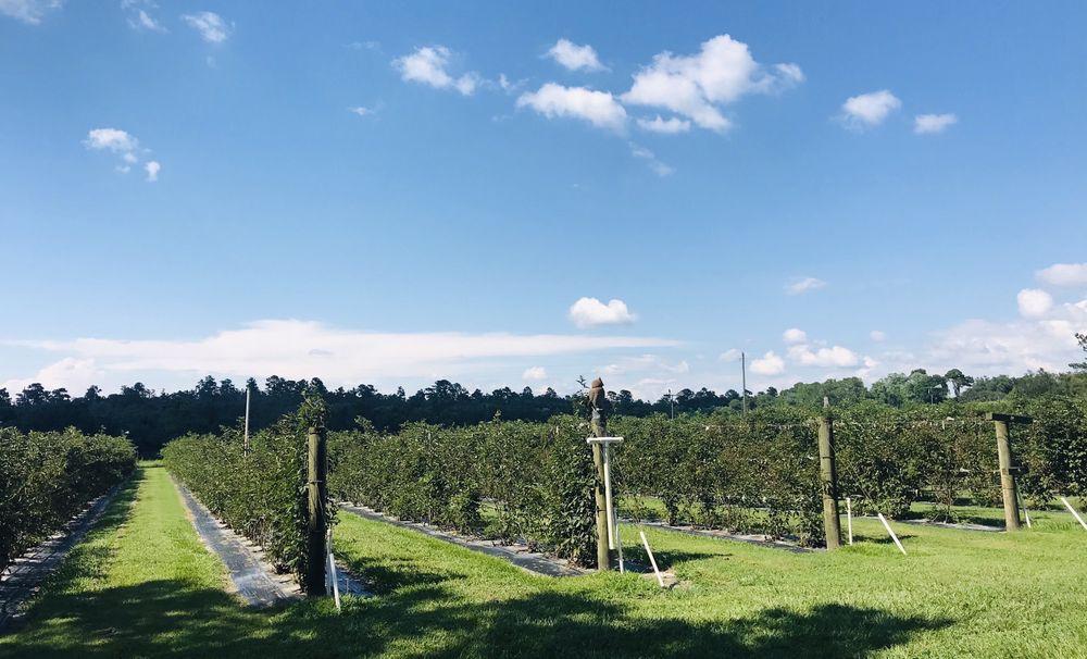 Bramble Creek Farms: 23031 Hayman Rd, Brooksville, FL