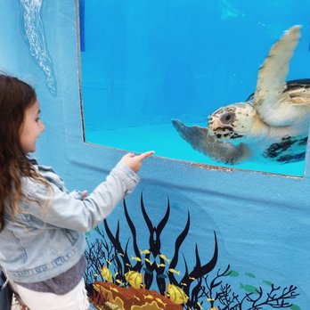 Photo Of Loggerhead Marinelife Center Juno Beach Fl United States So Sweet