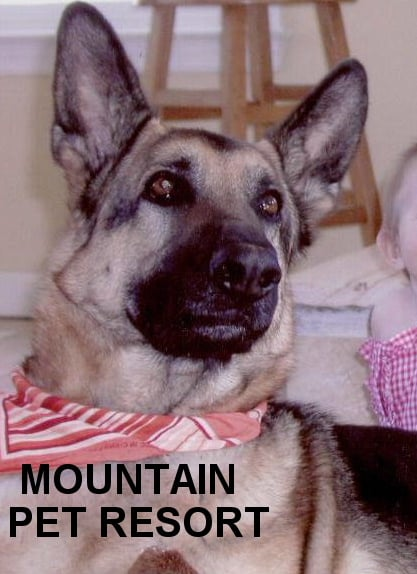 Mountain Pet Resort: 603 Nix Rd, Alto, GA
