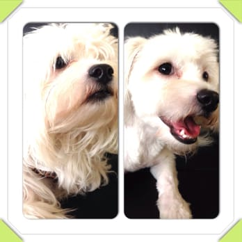 Best Dog Groomer In Long Beach Ca