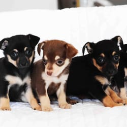 wall-animal-dog-pet2.jpg