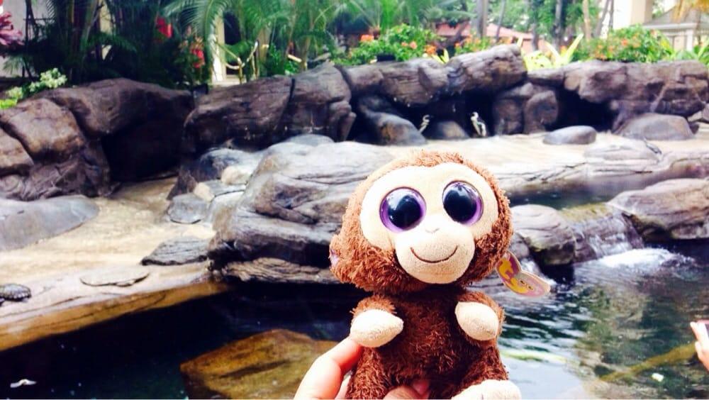 Hilton Hawaiian Village Waikiki Beach Photo Gallery: Monkey Meets The Penguins!! Aww
