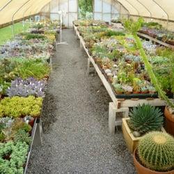 Photo Of Geffrayu0027s Cactus Gardens   Chico, CA, United States. In One Of