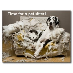 Heidi S In Home Pet Care Request A Quote Dog Walkers