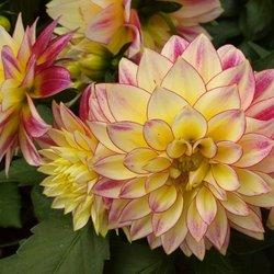 Sky Nursery - 217 Photos & 134 Reviews - Nurseries & Gardening