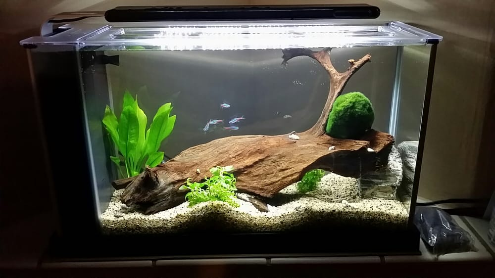 My Fluval Spec V 2 Days After Purchase From Aquarium